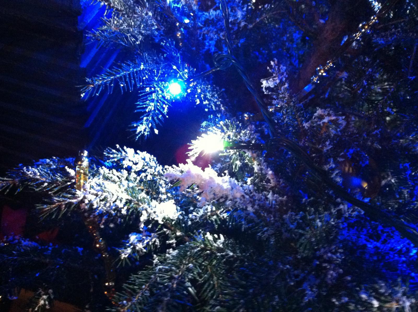 モミの木で本物のクリスマスツリー。