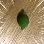 みかんや柑橘類の隔年結果の予防法。