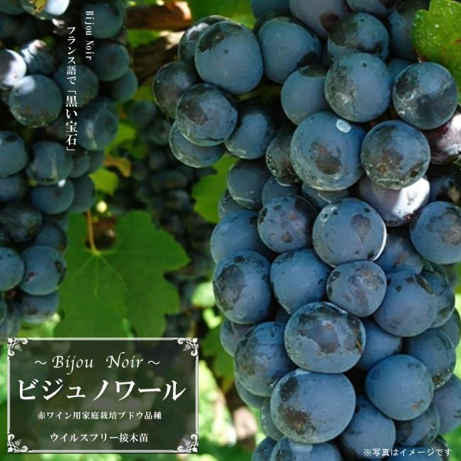 ワイン用ブドウ苗の販売について