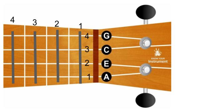 ukulele tel ve perde numaraları
