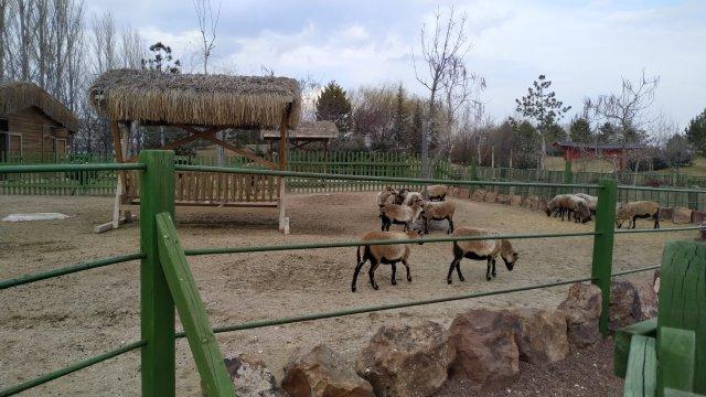 eskişehir sazova hayvanat bahçesi