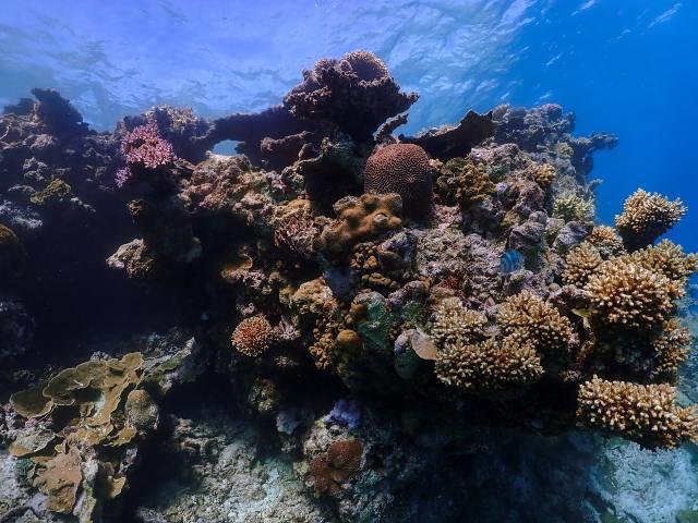 Büyük Set Resifi