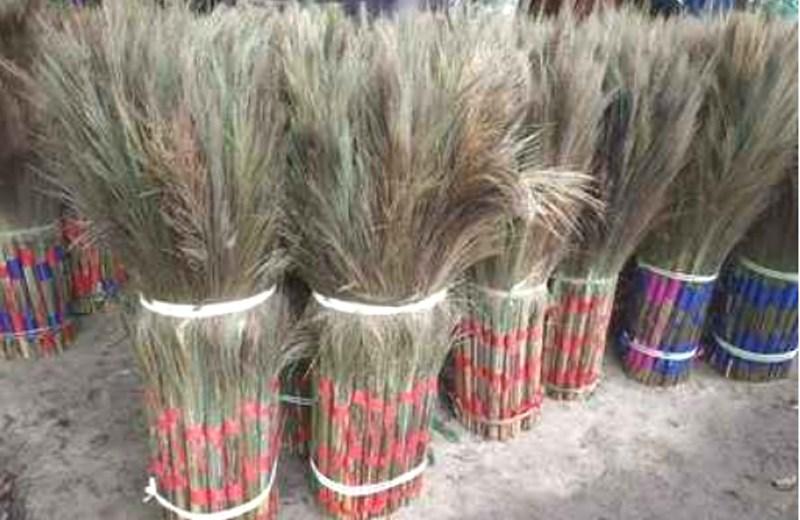 Nagaland's hill broom grass set to make its presence felt nationally