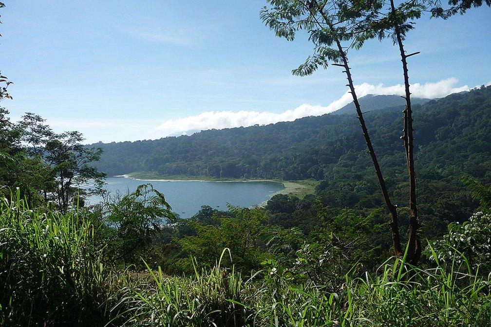 Bird Habitat in the Batukaru Mountain Tamblingan-Leson Mountain Area