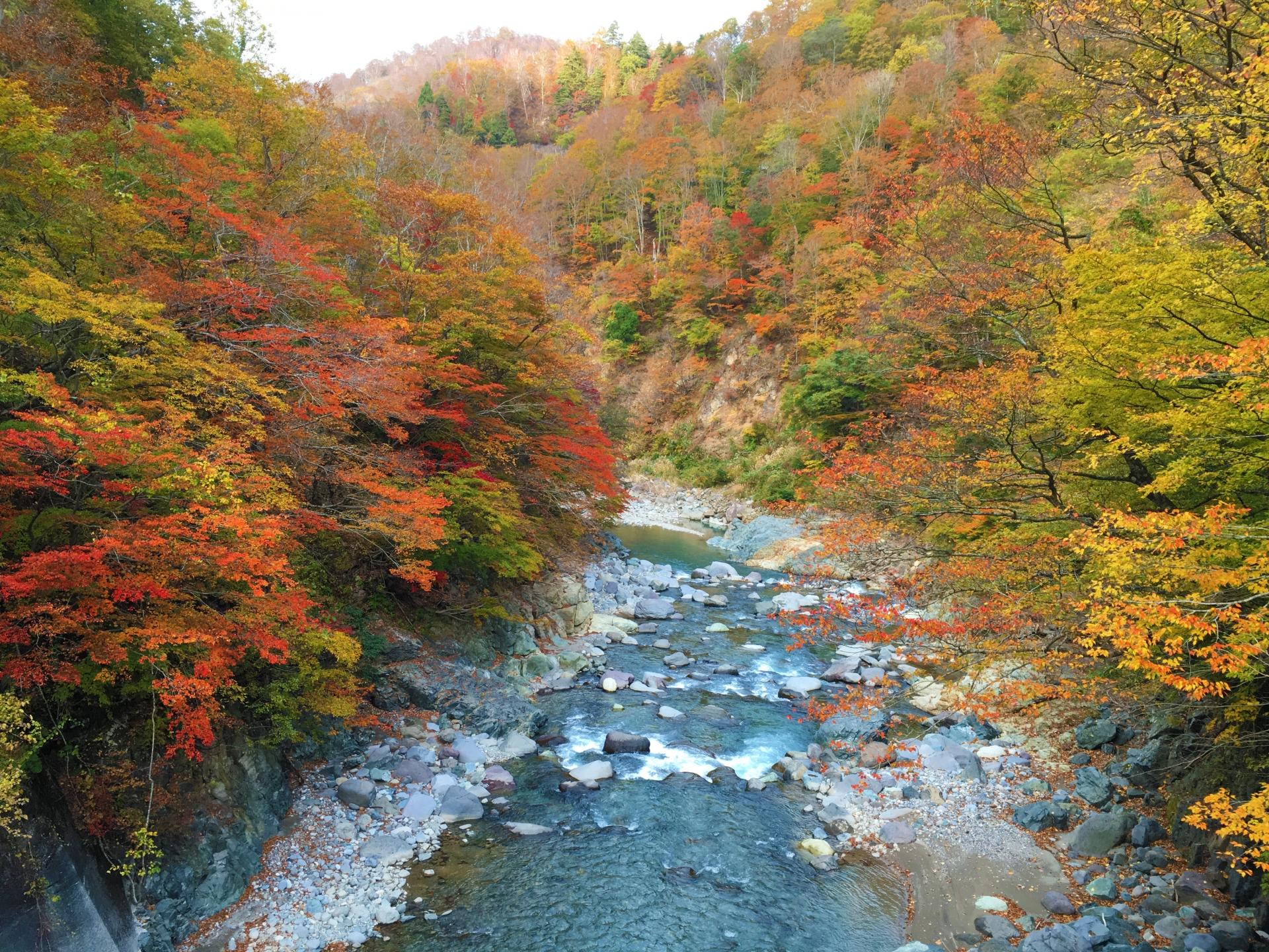Akiyama-go Valley in Nagano