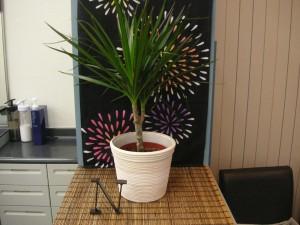 メンズサロンながさわの観葉植物1