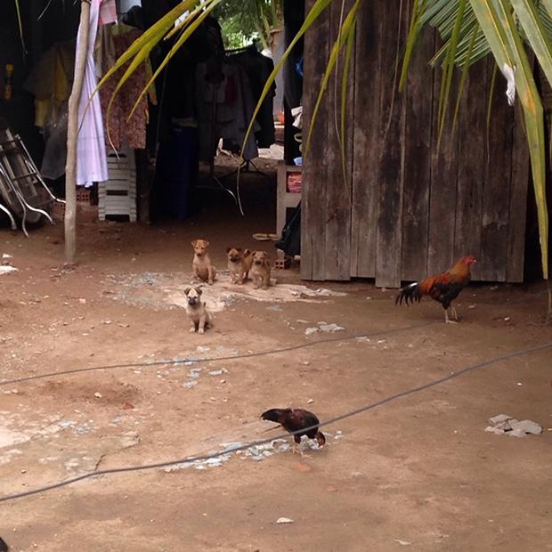 ベトナムのローカルな田舎の生活スタイル