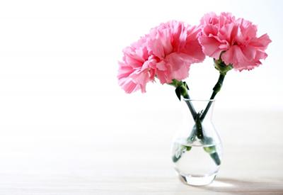 ピンクのカーネーション,花言葉,感謝