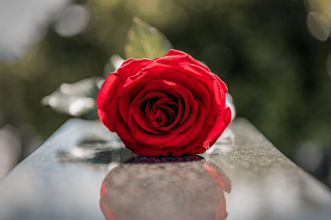 rose on top of a grave
