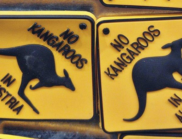 Kangury w Austrii