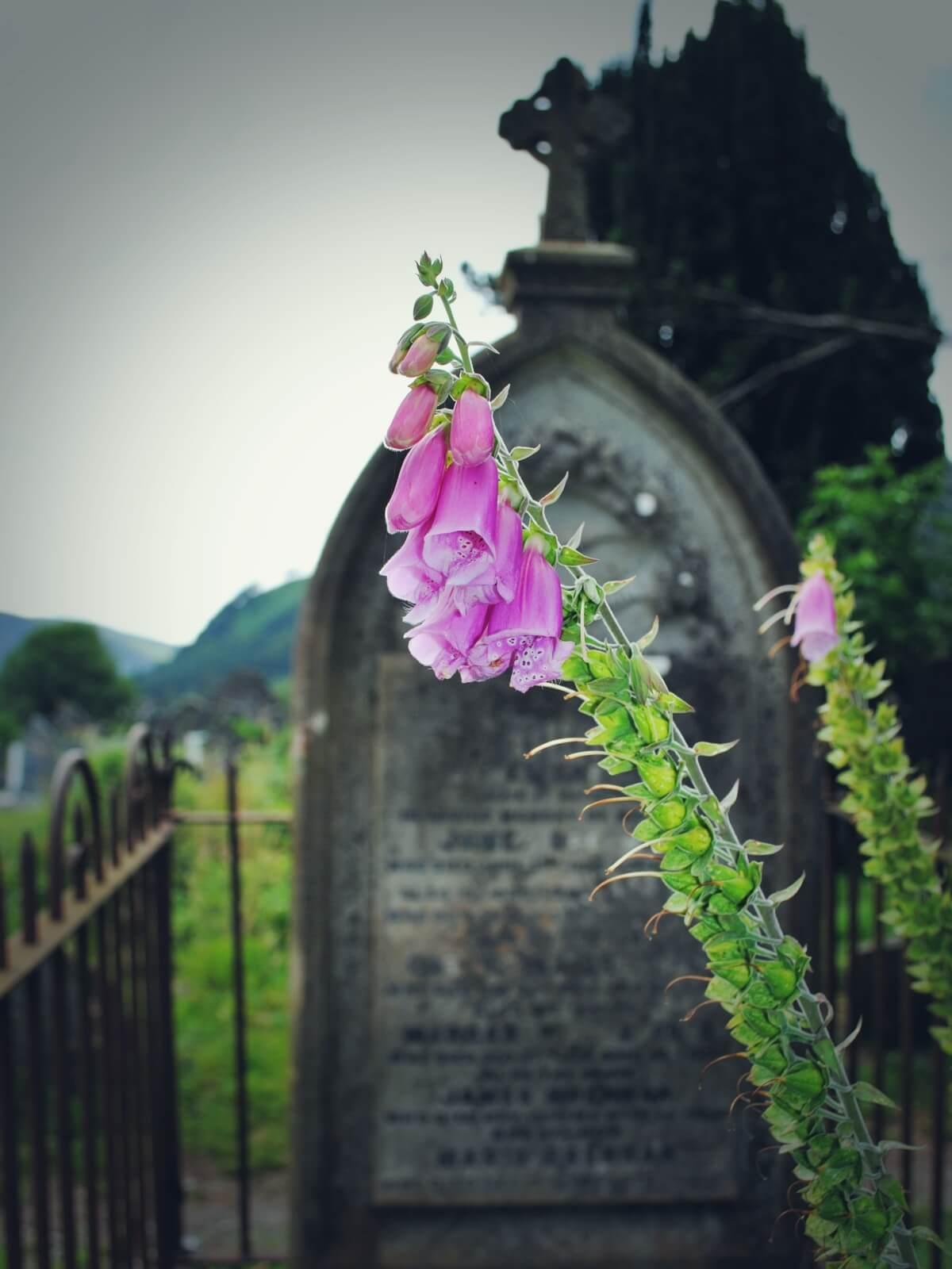 Celtycki cmentarz. Nagrobek na celtyckim cmentarzu w Wicklow.