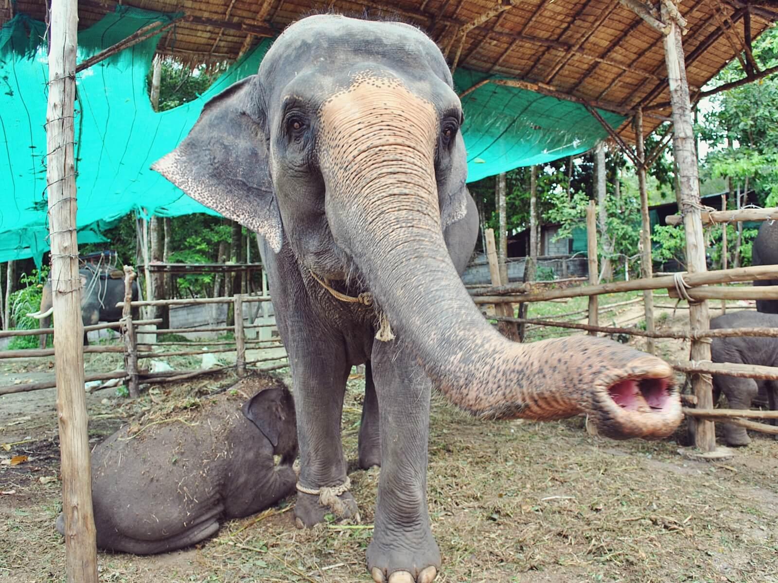 Słonie z wyspy Koh Samui.
