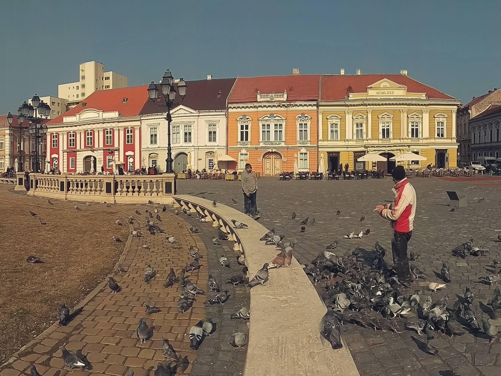 Kamieniczki na rynku w Timisoarze.