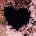 名城公園の桜の開花状況を調査!現在の様子を紹介!