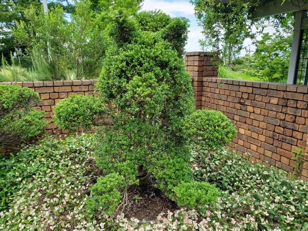 トピアリーガーデンにあるクマの形に剪定(せんてい)された木