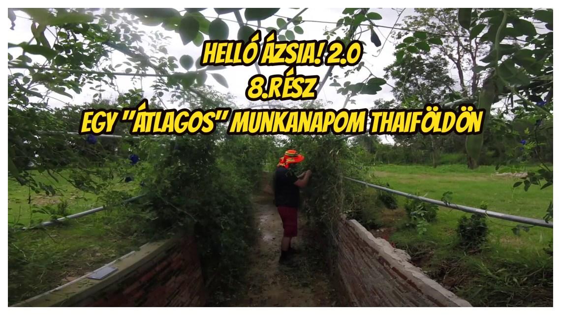Csak egy átlagos munkanapom Thaiföldön :) – 8.nap – Helló Ázsia! 2.0 VLOG