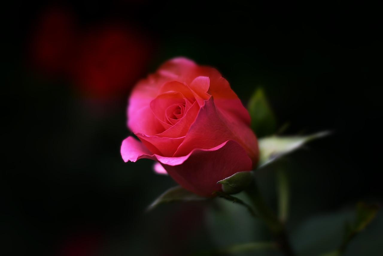 Egy szerelmes búvóhely mit sem ér rózsa nélkül