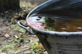 Captación y uso de agua pluvial