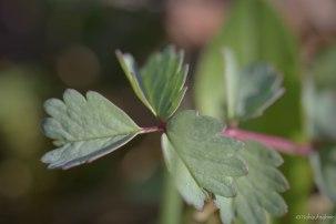 Blumenwiese-2