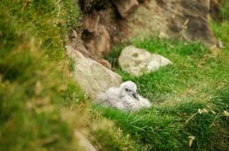 ... sondern von den allgegenwärtigen, fluffigen Jungvögeln, die...