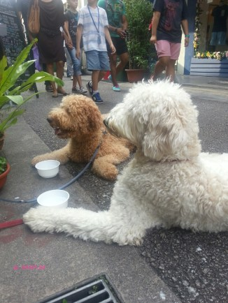 Doggies at Haji Lane