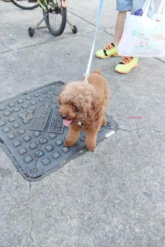 Lovely Doggy