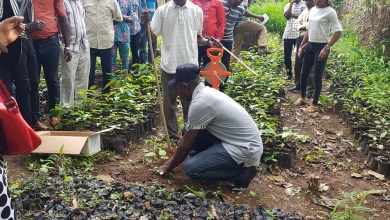 Photo of Group Commends FCTA For Approving Tree Planting Exercise