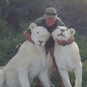 Man Mauled To Death By Two Beloved White Lions In Horror Attack In South Africa