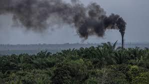 naija247news.com - Naija247news Media, New York - Australia's top science agency to cut carbon emissions by half