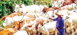 grazing ban stays, say states