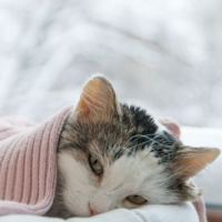 Prayer for healing a sick cat Today And Always - Pet