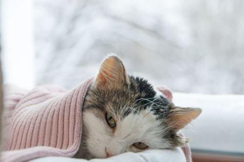 Prayer for healing a sick cat