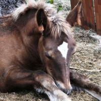 Prayer for healing a sick horse – Pet