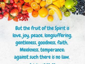 Andrew Wommack Message - The Fruit is the product of the Holy spirit