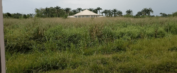 Weeds, reptiles take over abandoned NNPC, SEPLAT 200-bed infectious diseases centre in Imo
