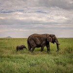 How to Choose Between Camping and Glamping for Your African Safari
