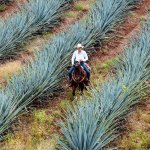 The 30 Best Tequilas for Every Budget