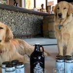 Meet the Two Dogs Delivering Beer and Smiles for This Long Island Craft Brewery