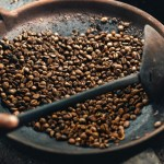 What Climate Change Means for the Future of Coffee