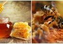 12 Amazing Health Benefit of Honey