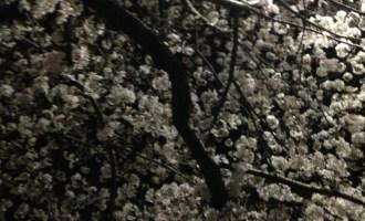 ネイリストの求人情報 東京版 夜桜