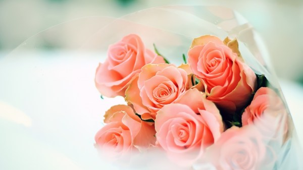 peach-roses-flower-hd-wallpaper-1920×1080-26281 – NAIMA ...