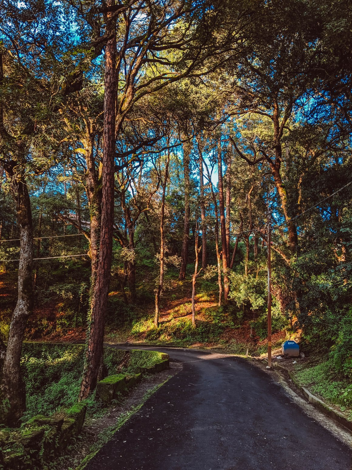 #EyesForDestinations, #EyesForIndia, #NAINAxRanikhet, Destination Photography, Landscape Photographer, Naina Redhu, Naina.co, Professional Photographer, Ranikhet, The Queen's Meadow, Uttarakhand, Family Vacation, Annual Vacation, Hills, Indian Hills, Hills in India, Photographer India, Blogger India, Travel Photographer, Travel Blogger, Photo Album