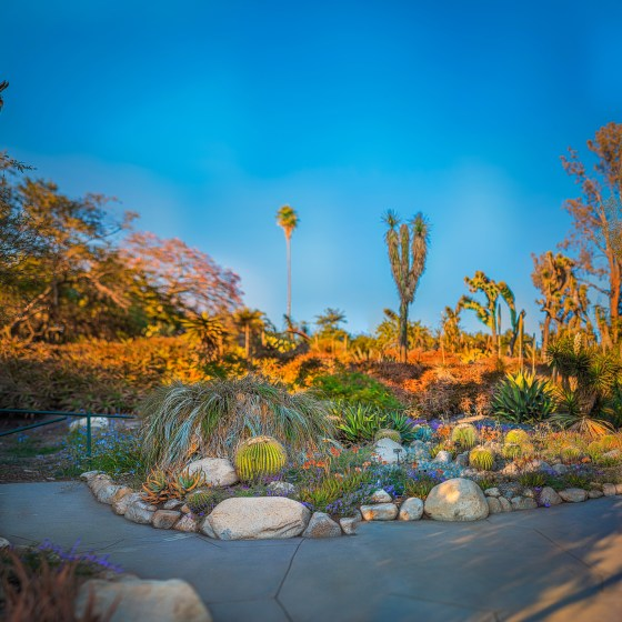 Huntington Library, Huntington Botanical Garden, Los Angeles, Desert Garden, Panorama, Large Format Photography, Landscape Photography, USA, America, Landscaping