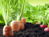 How Anambra Attracted over $1 billion dollars Investment in Agricultural Sector