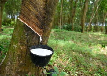 Rubber is a white gold in dire need of investment – Producers
