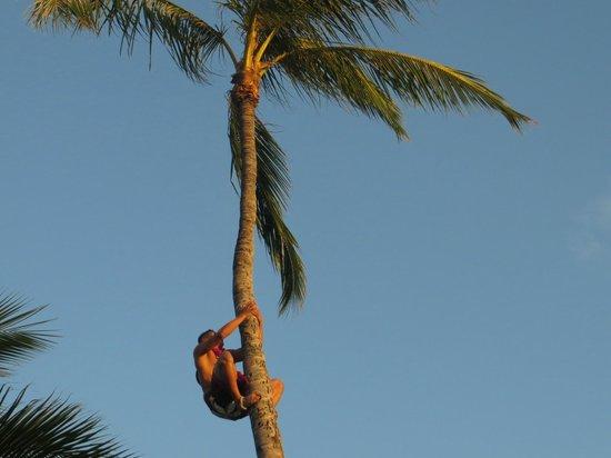paradise-cove-luau