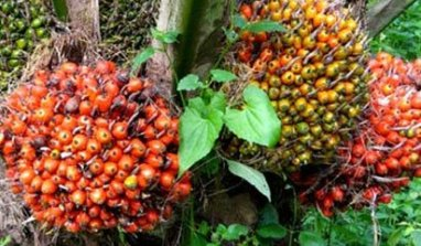 Okomu Oil Palm to spend N250 million on CSR this year