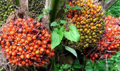 Okomu Oil Palm to spend N250 million on CSR this year