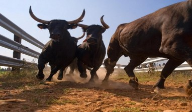 Reasons why the stock market is on a bull run